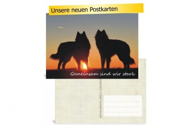 LupoVet-Postkarte - Gemeinsam sind wir stark