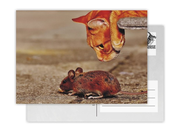 Postkarte CatsMouse