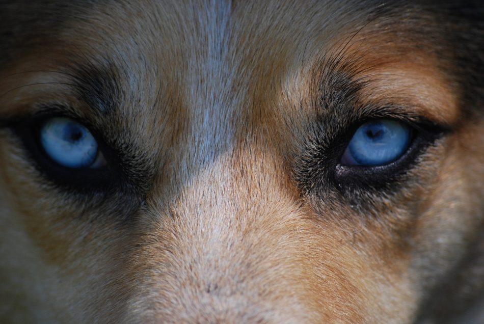 eyes-712125_950