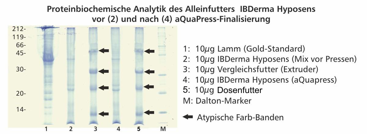 proteinbiochemische_analytik_Ibderma_hyposens3