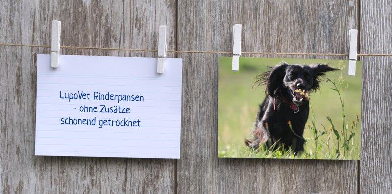 lupovet_notiz_rinderpansen