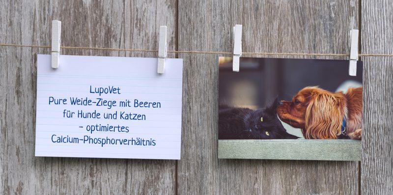 lupovet_notiz_Ziege_pur_mit_beeren