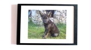 erfahrungsbericht_schaeferhund1_1
