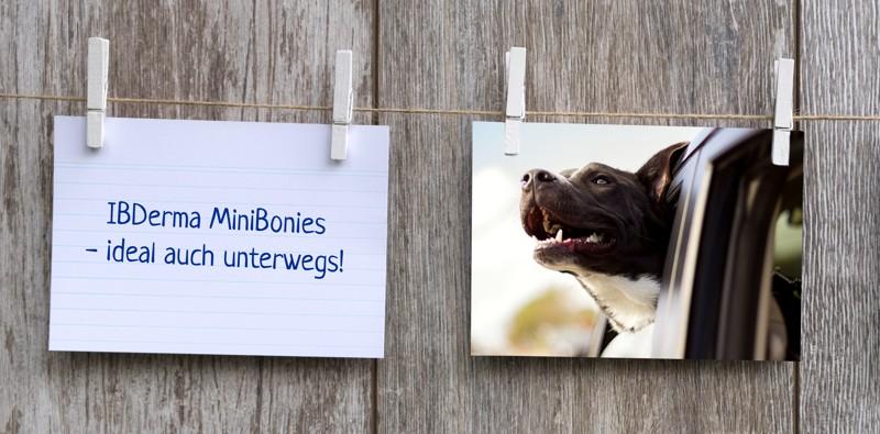 IBDerma_minibonies_notiz