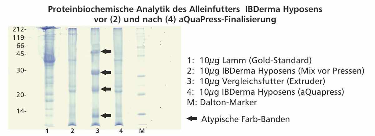 proteinbiochemische_analytik_Ibderma_hyposens2